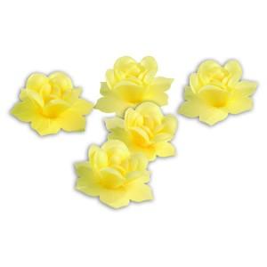 Jonquilles roses - x5